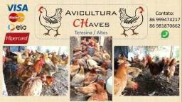 Avicultura CHaves, produção e comercialização de aves caipiras caipirao