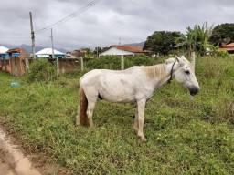 Vendo cavalo e pônei fêmea