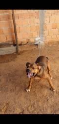 Cachorro Bravo 1,400