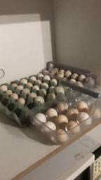 Título do anúncio: Ovos de galinha Garnizé Chabo Nagazaki