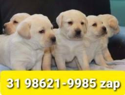 Título do anúncio: Canil Lindos Filhotes Cães BH Labrador Golden Dálmata Akita Rottweiler Pastor