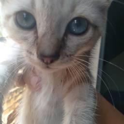 Título do anúncio: Duas lindezas de olhos azuis na Vila da Penha!!!