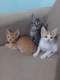 Título do anúncio: Gatos pra Adoção