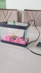 Título do anúncio: Aquário 3L Com planta e pedras Termômetro e Termostato Kit peixe