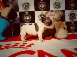 Bulldog Francês Macho- Fêmea