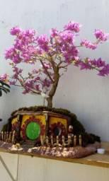 Bonsai Primavera