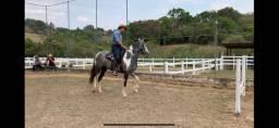 Égua MM registrada