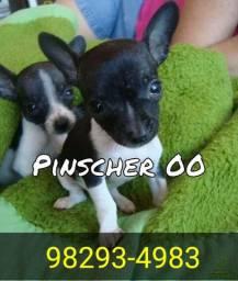 Canil Pinscher 00