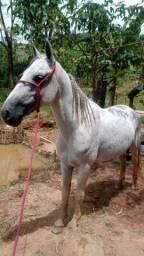 Vendo cavalo 5 anos , mangalarga