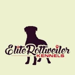 Canil elite rottweiler