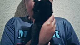 Dôo filhote de gato preto