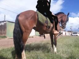 Cavalo e potro pra vende