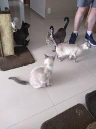 Doação de 3 gatas