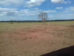 Fazenda 126 Alqueires - Dupla aptidão -região de Cassilândia-MS - F200915