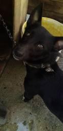 Título do anúncio: Cachorro macho( doação com responsabilidade)