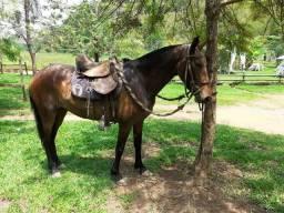 Égua registrada prenha urgente!
