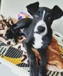 Doa-se cachorro de 3 meses