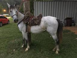 Égua encilhada