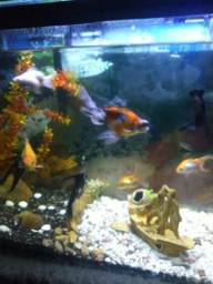 Vendo o troco aquário completo