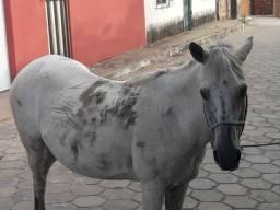 Vende se uma égua
