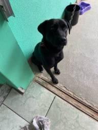 Título do anúncio: Dog para adoção