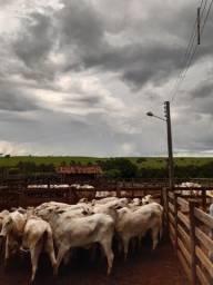 Título do anúncio: Inseminação artificial em bovinos