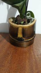Vaso para orquidea bambu