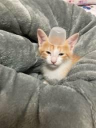 Título do anúncio: Doa-se três gatinhos lindinhos