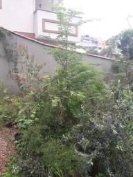 Título do anúncio: Muda árvore piteco Pithecolobium tortum 2,3 metros