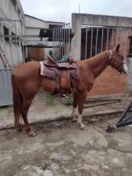 Título do anúncio: Cavalo sela e rebok