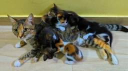Filhote de gato para doações