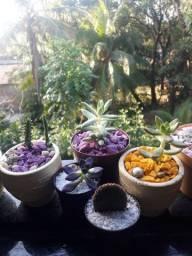 vende cactos e plantas de folhagem