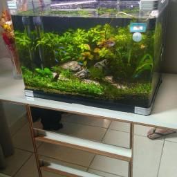 Título do anúncio: Vendo plantas aquáticas