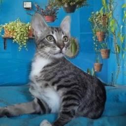 Título do anúncio: doação lindo gato castrado 5 meses machinho