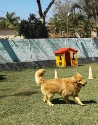 Hotel para Cães em Ribeirão Preto