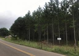 Área terra rural com plantio de pinus e eucalipto