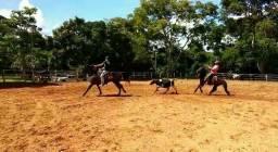 Cavalo criolo qm