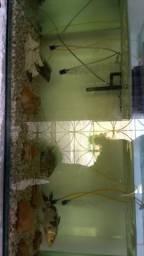 Vendo aquario completo 988167293