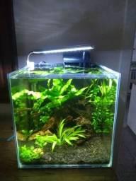Aquario cubo 27L plantado