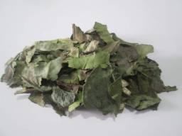 Título do anúncio: Camomila, chá verde, canela de velho