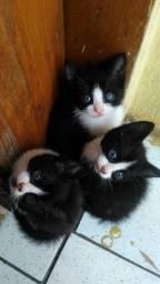 Gatinho fofinhos