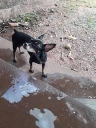 Cachorro Número 3