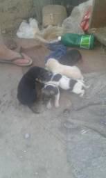 Doa-se cachorros com 2 meses