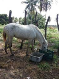 Égua potrinha de 1 ano