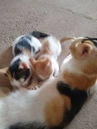 Gatinhos para adoção machos