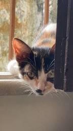 Adoção de gatinha dengosa ?