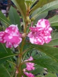 Título do anúncio: Flores/Plantas (Menor Preço)