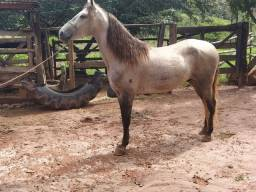 Cavalo manga larga macha batida macia