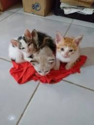 Doa-se gatos 4 filhotes (todos macho)