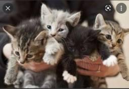 Título do anúncio: Procuro gata filhote (leia a descrição)